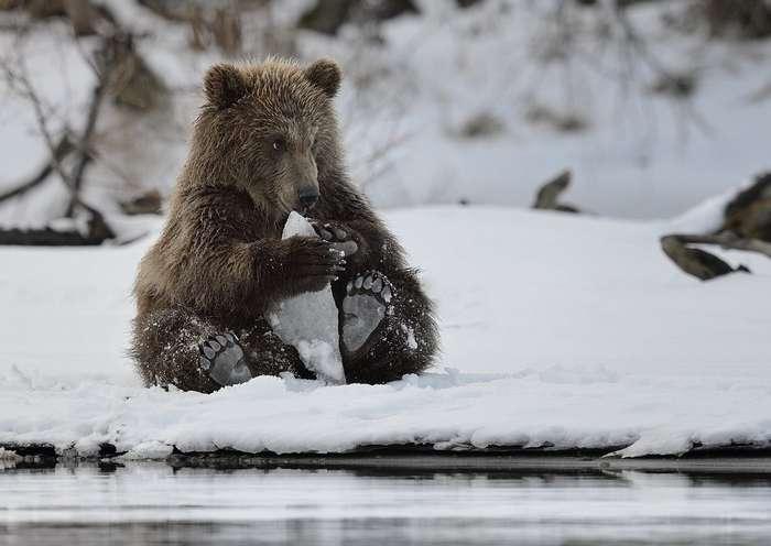 Забавные Животные (29 фото)