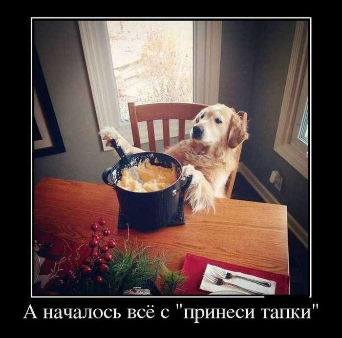 В здоровом смехе здоровый дух!