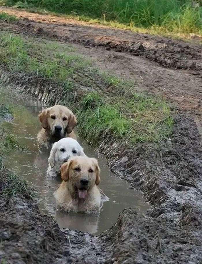 20 собак, которых не стоило спускать с поводка