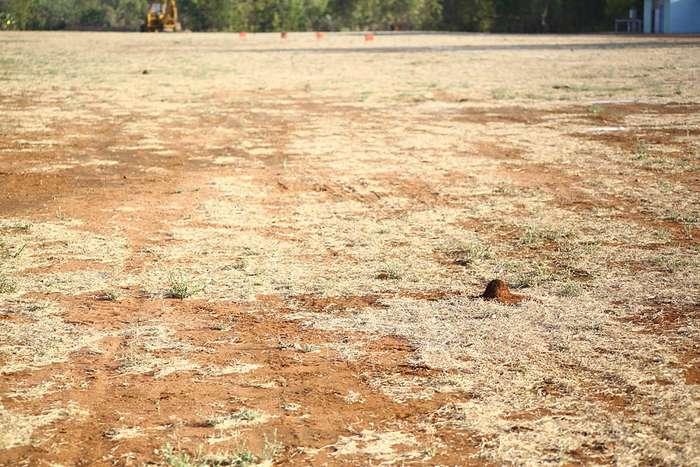 Австралия: небольшая реколонизация Земли