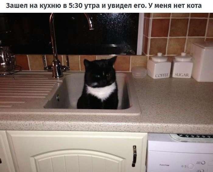 10 случаев, когда люди думали, что у них нет кота