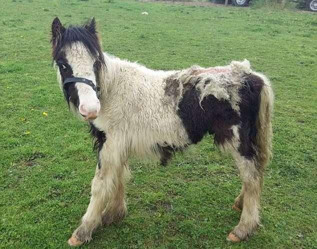 Спасенный жеребенок превратился в шикарного коня