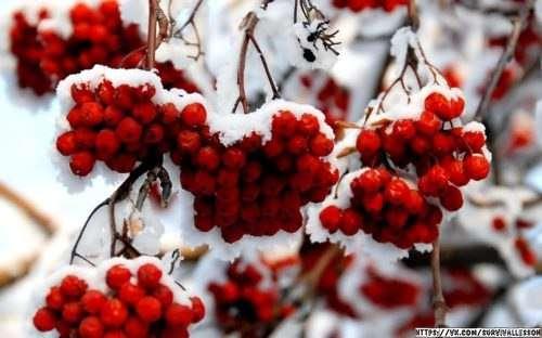 Лечение простуды в лесу