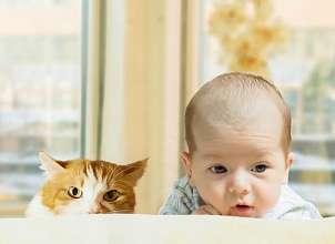 Кошка и новорожденный: вопросы совместимости