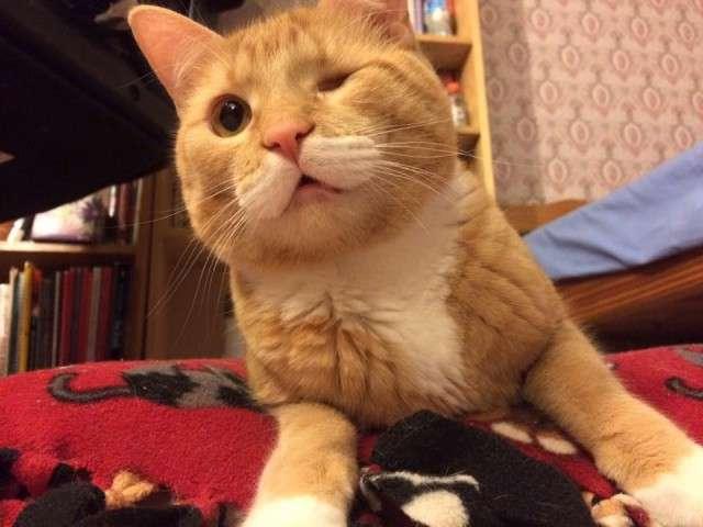 Одноглазому и неуклюжему коту приходилось выживать на улице…