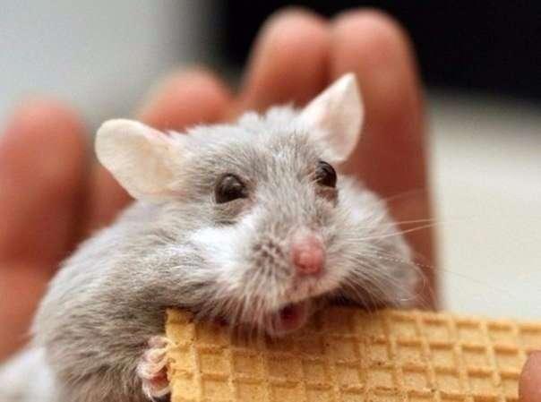10 животных, которых тоже чертовски удивляет этот мир