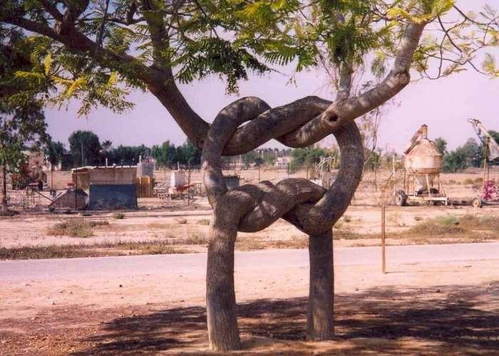 Деревья Акселя Эрландсона
