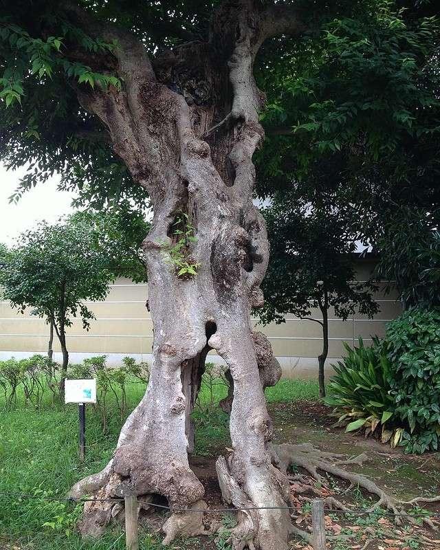 25 по-настоящему необычных деревьев