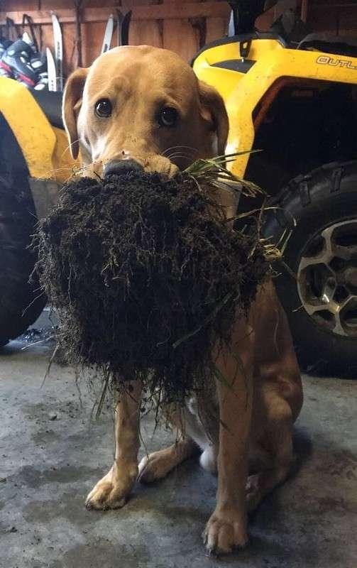 25 раз, когда домашние животные приносили своим владельцам самые неожиданные подарки