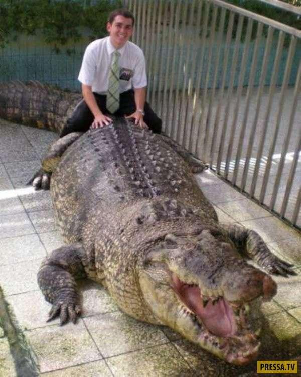 Забавные предметы и животные, огромных размеров