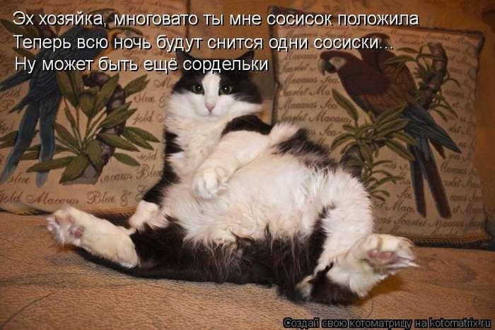Наши котики..