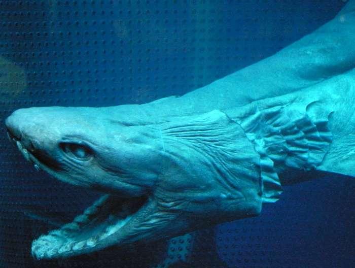 Зоологи вычислили, какова реальная продолжительность жизни Акул