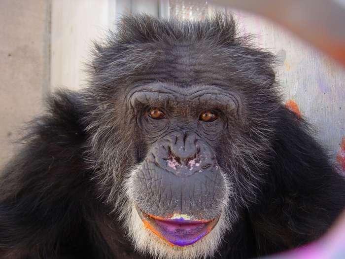 Как я обезьян в Аральск-7 возил...