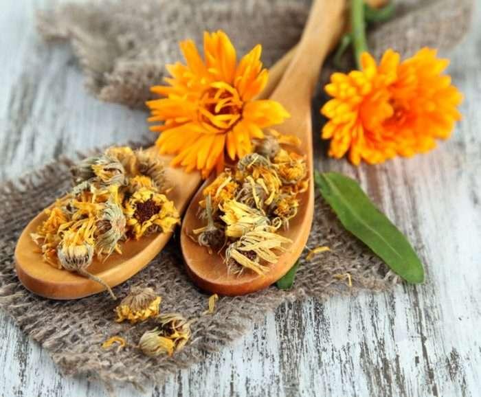 Лечебные травы для женского здоровья и их свойства