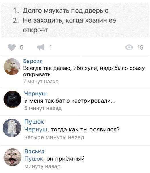 Смешные комментарии из социальных сетей 29.09.2017