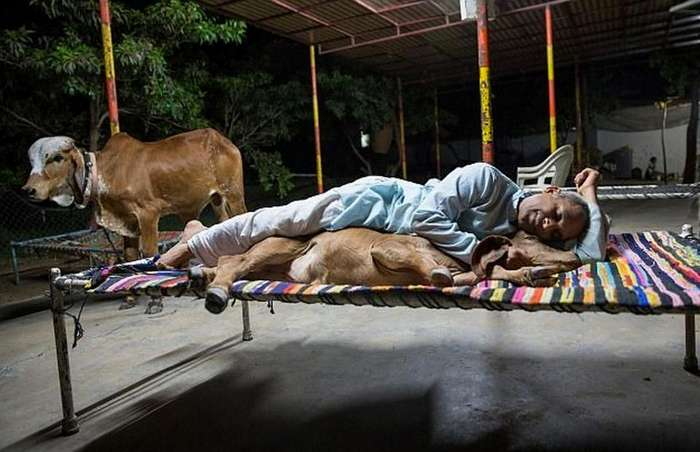 Бывший игроман из Индии бросил семью и живет с тёлками