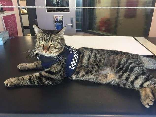 В отделении полиции Новой Зеландии живёт кот, который помогает жертвам преступлений успокоиться и прийти в себя