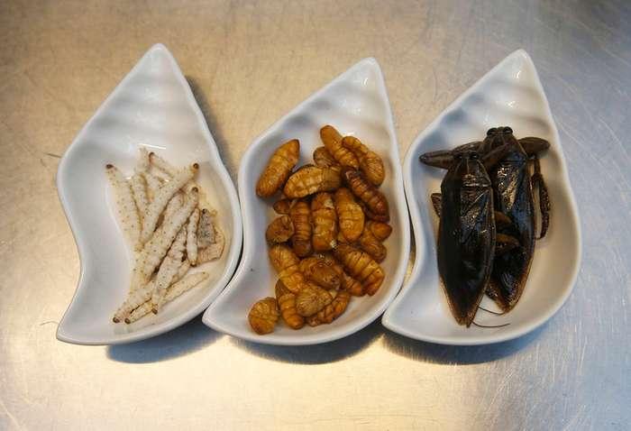 Приятного аппетита: тайские блюда из насекомых