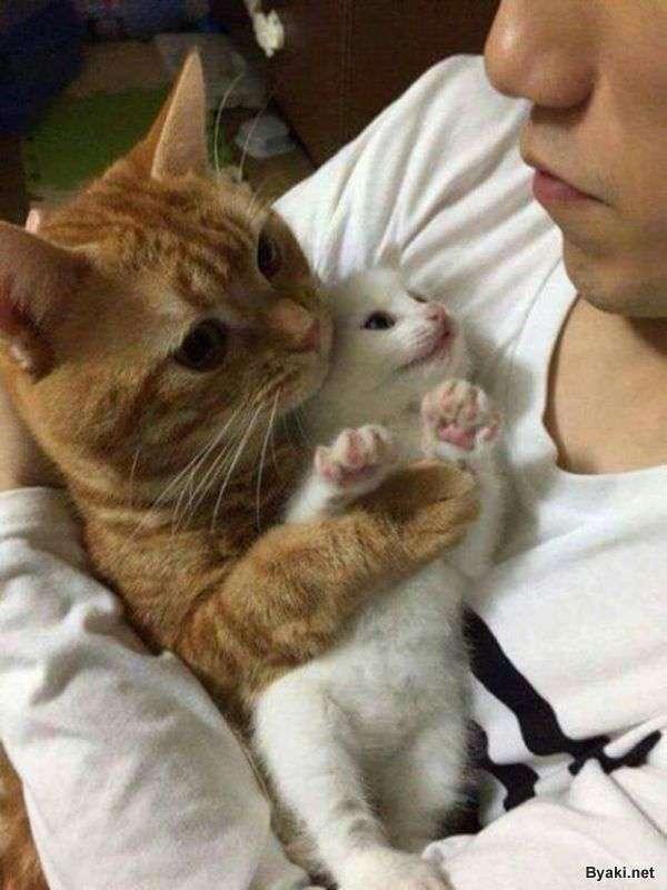 Пятничные забавные и симпатичные котики
