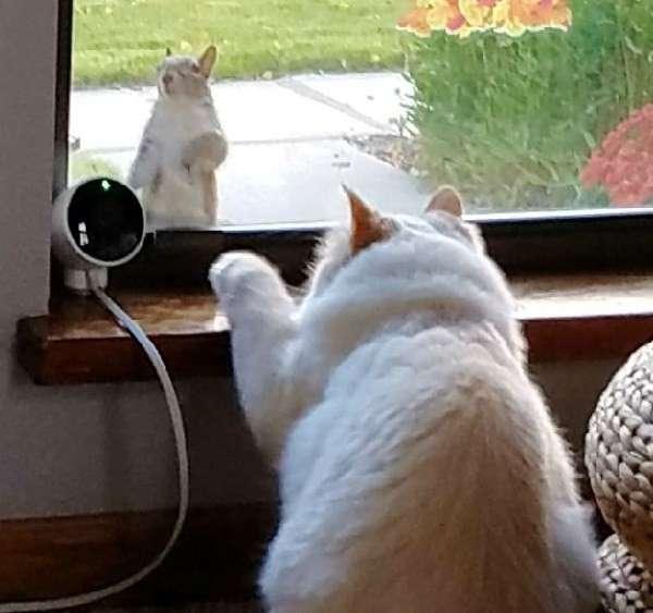 Кот как диснеевская принцесса притягивает к себе разных животных