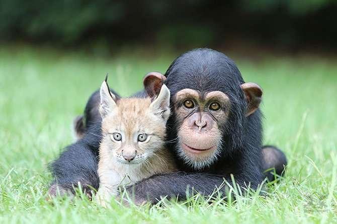 Трогательная дружба между животными