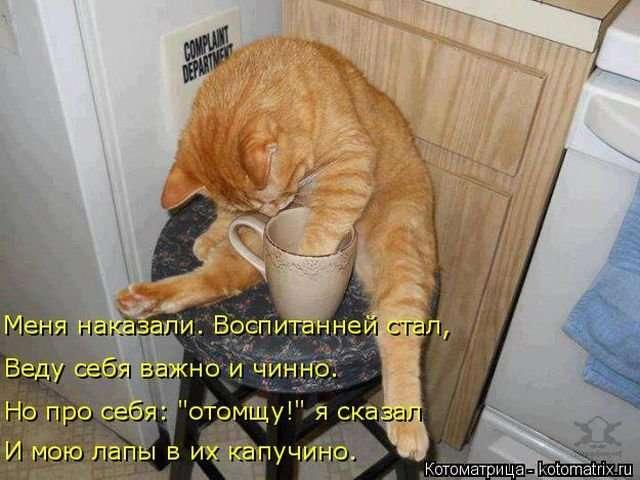 Свежая порция котоматриц