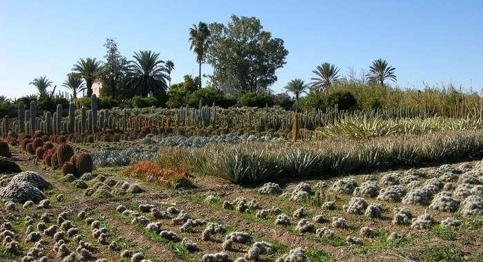Самая крупная ферма кактусов