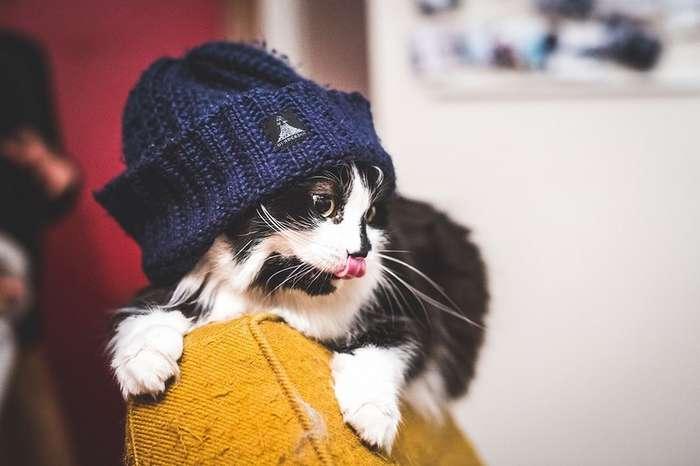 Когда не коты живут у хозяина, а хозяин у котов