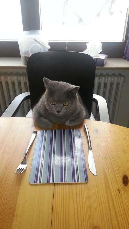 30 смешных кошачьих фотографий из интернета