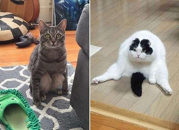 Эти коты - уже почти люди!
