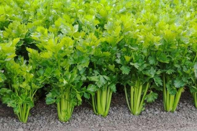 А вы знаете как растут эти продукты?