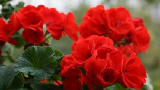 Этот цветок должен быть в каждом доме! И вот почему..Этот цветок должен быть в каждом доме! И вот почему..