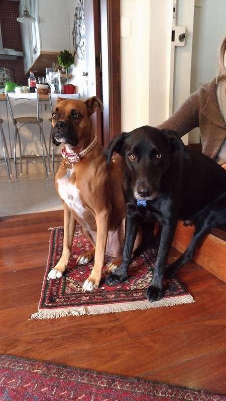 Эти собаки - почти что люди!