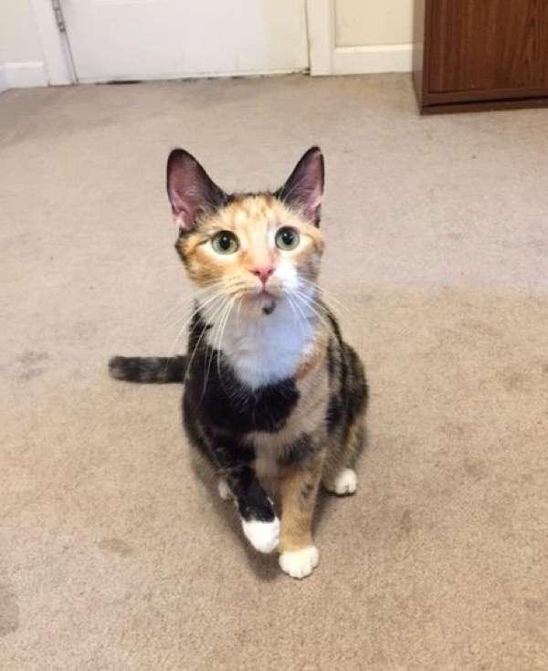 Беременная кошка пришла к людям за помощью