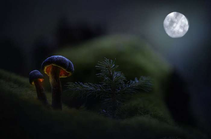 Удивительные грибы, которые светятся ночью неоновым светом (Фото)