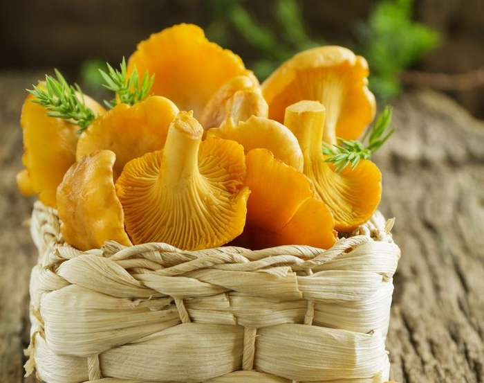 Медики назвали уникальные целебные свойства грибов