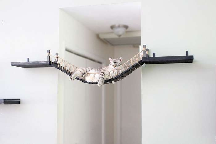 Любящие хозяева смастерили мост для кота в стиле Индианы Джонса