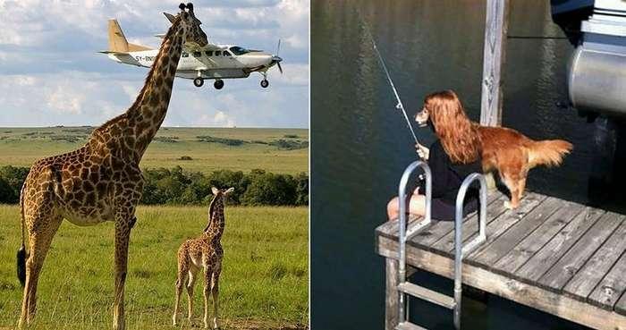 Это должен увидеть каждый: 15 фото животных, сделанных в идеальный момент