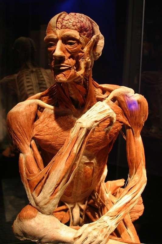 Что случится с вами, если вы завещаете свое тело науке?