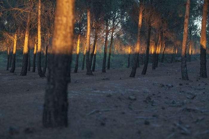Удивительные совпадения на снимках Дениса Черима
