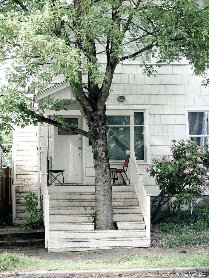 Дома, архитекторы которых отказались спиливать деревья