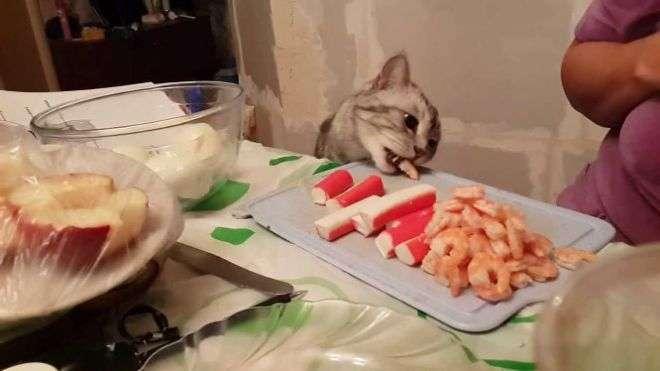 20 котов, которые без ума от человеческой еды