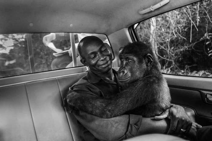 Фотографы против браконьеров: душераздирающие кадры преступлений против дикой природы