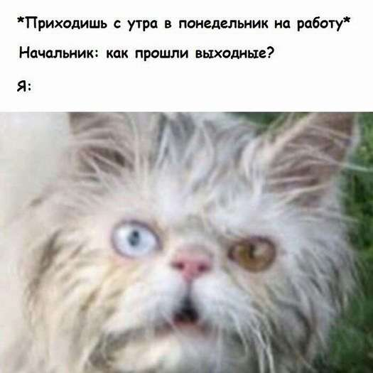 Коты. Отнюдь не ми-ми-ми.