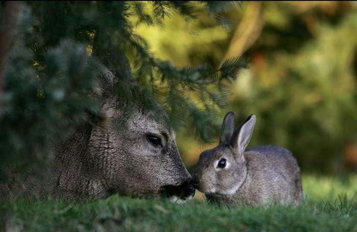 Удивительная дружба животных. Часть 2