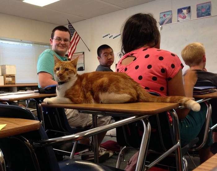 Кот стал студентом старшей школы в Сан-Хосе