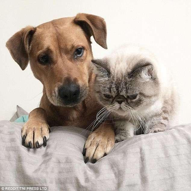 Кошки и собаки под одной крышей: 15 милейших фотографий