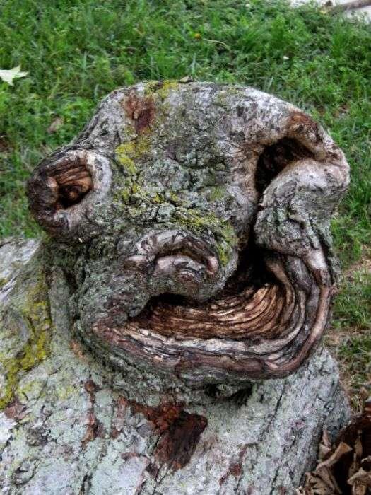 Природа проявляет фантазию: деревья необычной формы