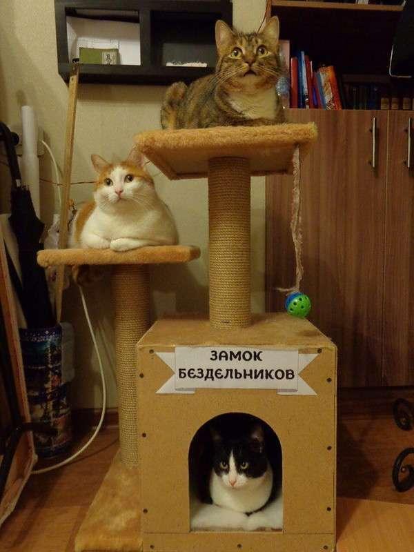 Подборка интересных и веселых картинок 03.11.17