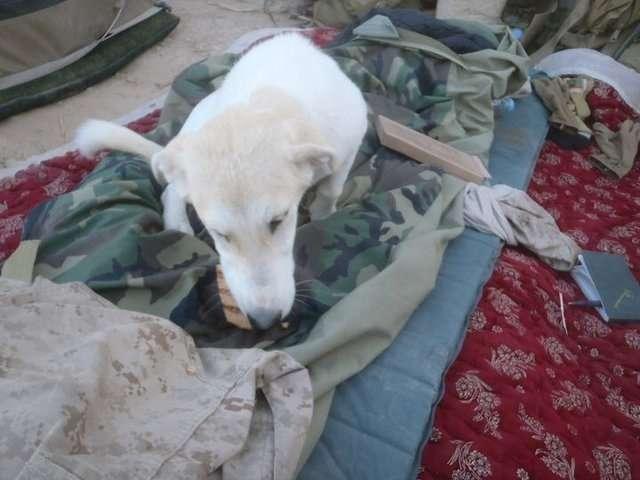 Бродячая собака изменила жизнь морскому пехотинцу в Афганистане